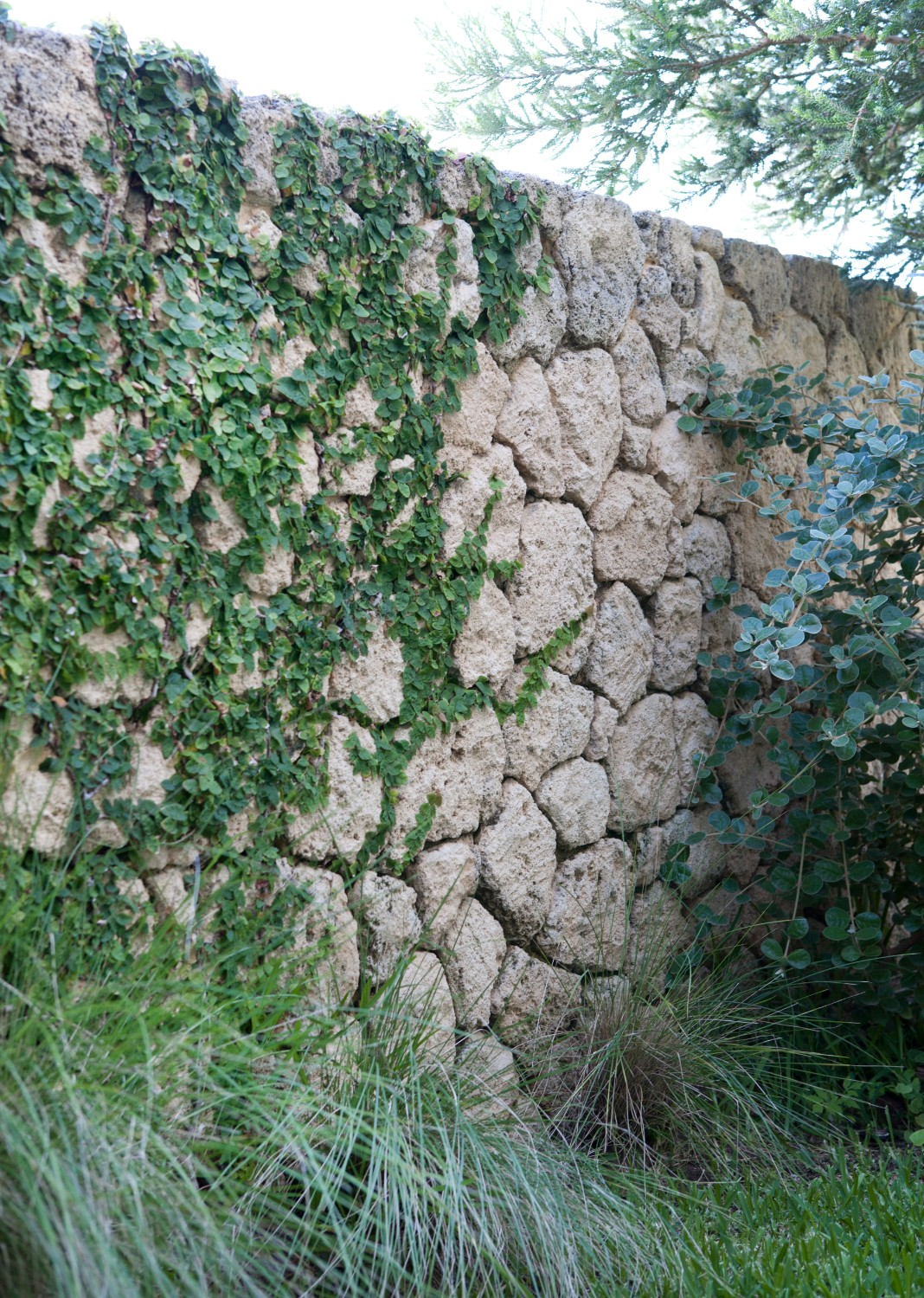 vine going up rock wall with grass and trees around it